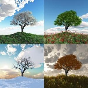 TreeinFourSeasons