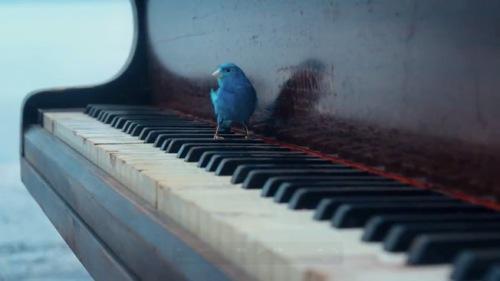 bird-piano-ocean